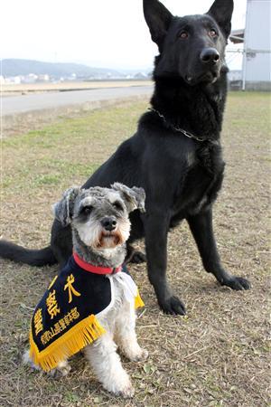 和歌山県警に正式採用された警察犬「クリーク号」(手前)