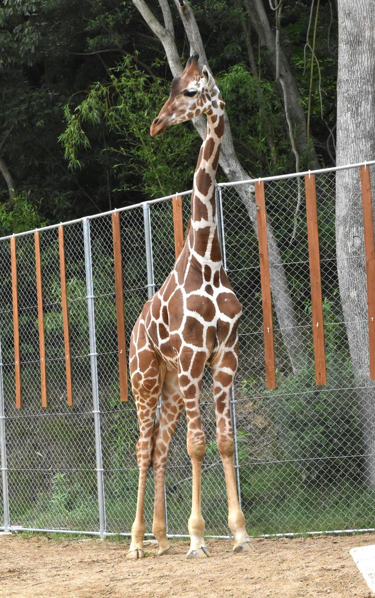 とり 動物園 しろ